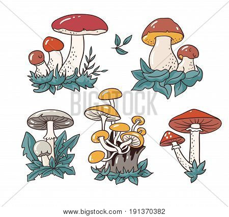 Hand drawn set with cartoon mushroom and toadstools. Vector illustration - isolated objects on the white background .