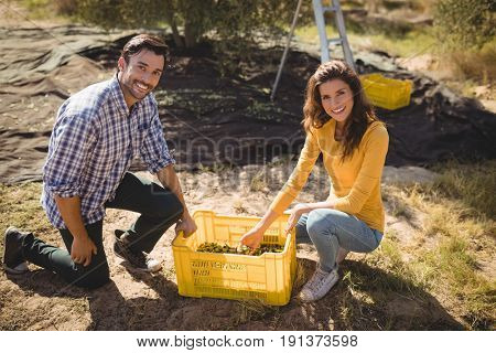 Portrait of smiling couple with crate on sunny day at olive farm