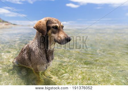 animal and nature concept - wild dogs in sea or indian ocean water on seychelles beach