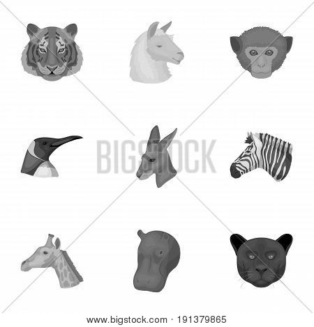 A set of icons of wild animals. Predatory and peaceful wild animals.Realistic animal icon in set collection on monochrome style vector symbol stock web illustration.