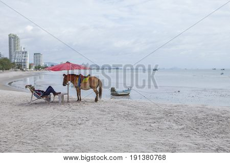 HUAHIN PRACHUAP KHIRI KHAN THAILAND -J UNE252016 : tourist horse keeper lying on beach chair with pony horse on huahin beach most popular traveling destination in prachuap khiri khan southern of thailand