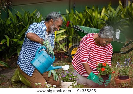 Smiling senior couple planting together while kneeling on field in backyard