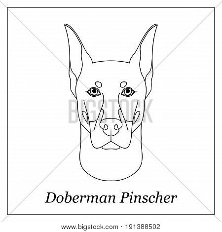 Isolated black outline head of doberman pinscher on white background. Line cartoon breed dog portrait