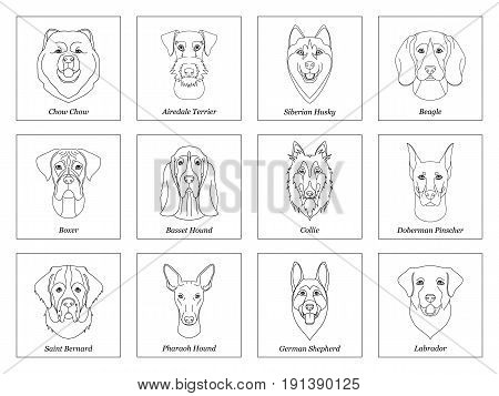 set collection of isolated black outline head of airedale terrier chow husky pharaoh hound saint bernard labrador collie doberman boxer on white background. Line cartoon breed dog portrait