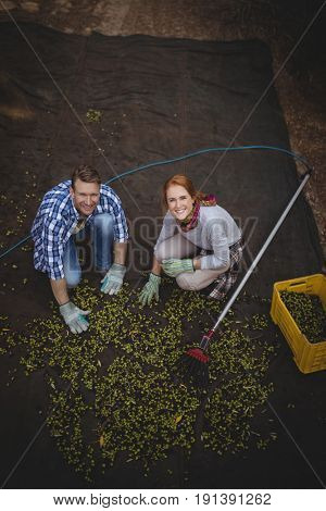 High angle portrait of young couple working at olive farm