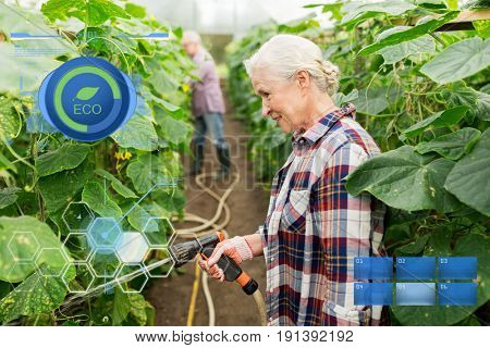 organic farming, gardening, agriculture and people concept - happy senior couple garden hose watering plants or cucumber seedlings at farm greenhouse
