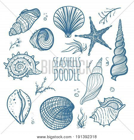 Set of seashells on white background. Hand drawn doodle seashells starfish seaweed and coral. Seashells vector illustration.