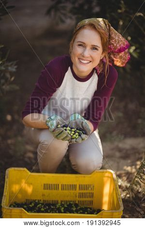 Portrait of happy young woman collecting olives in crate at farm