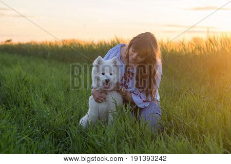 yooung woman posing with samoyed or husky puppy in summer fields during sunset
