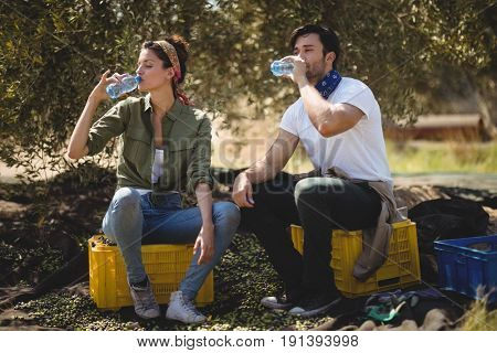 Young couple drinking water while sitting on crates at olive farm