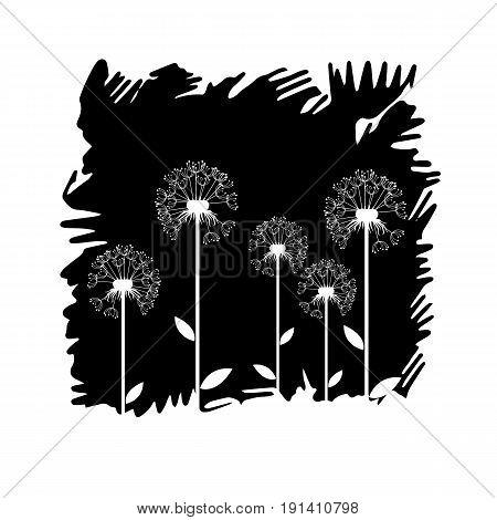 dandelion vector background botany flower blossom fluffy