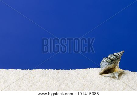 Sea snail shell on white sand with ultramarine background. Small, dark gray colored, spirally coiled shell of a seawater snail with the little lid, called operculum. Macro photo.