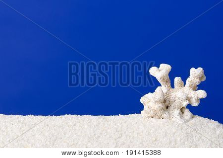 White coral on white sand with ultramarine background. Small skeleton of a seawater coral with arms. Reef builder and polyp build of Calcium carbonate. Macro photo.