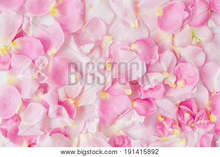 Beautiful pink rose petals. Flat lay, top view. Background of petals