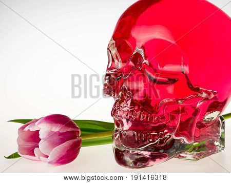 Red crystal skull glass brainpan with pink tulip flower