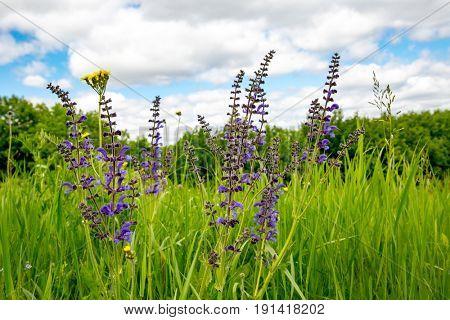 Summer wild flowers on green meadow