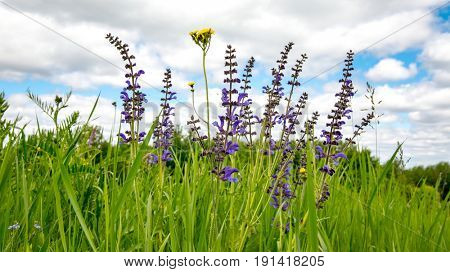 Nice wild summer flowers in green grass