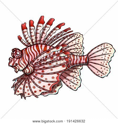 Friendly colorfull red strips lionfish separately on a white background. Beautiful fish, Pterois volitans. Manual vector illustration.