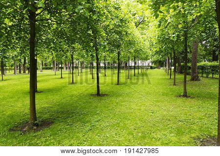 Trees In A Meadow With Lawn.
