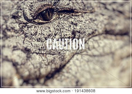 Word Caution. on the Caiman face background.