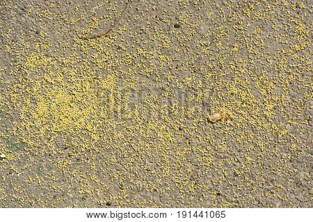 Close up yellow millet grain on grey asphalt as texture for background.