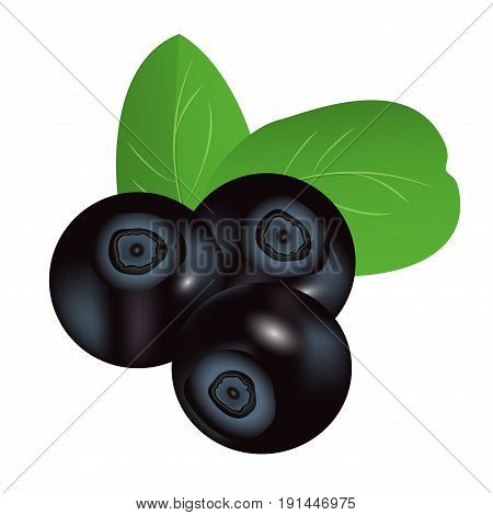 Bilberry isolated on a white background. Vector illustration.