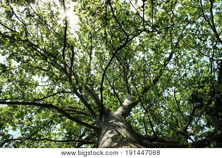 View on the treetop from below with sunshine