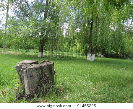 Old stump in the park on the green grass