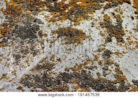 Stone Surface With Moss And Lichen