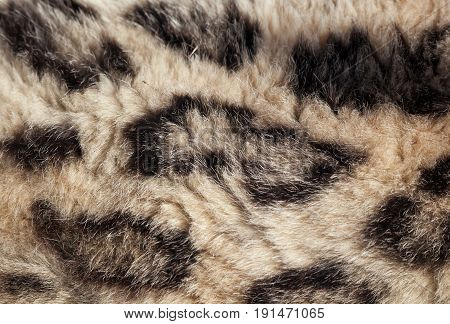 Close up of the fur of a beautiful snow leopard showing the spot pattern. Space for text.