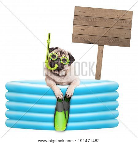 funny summer pug dog with goggles snorkel and flippers in inflatable pool with wooden sign isolated on white background