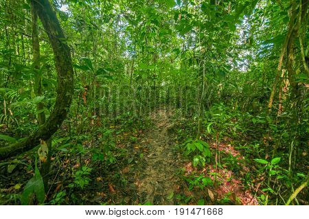 Inside of the amazonian Jungle, surrounding of dense vegetation in the Cuyabeno National Park, South America Ecuador.