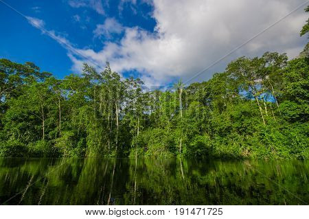 Dense vegetation on Cuyabeno river inside of the amazon rainforest in Cuyabeno Wildlife Reserve National Park, South America Ecuador.