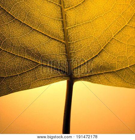 A detail photo of an autumn leaf