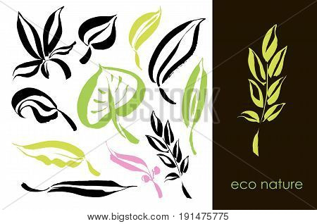 Set of hand drawn leaves, green leaf, sketches and doodles of leaf and plants, green leaves vector collection. Design elements with ink and brush. Hand drawing with paint brush