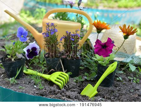 Garden still life with summer flowers, pansy, petunia, daisy, and working tools on flowerbed. Vintage planting flowers concept