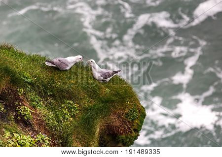 Photo of seagull couple standing on mossy cliff