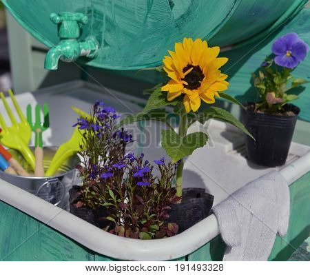 Garden still life with flowers in planting pots and working tools. Vintage planting flowers concept. Beautiful summer background