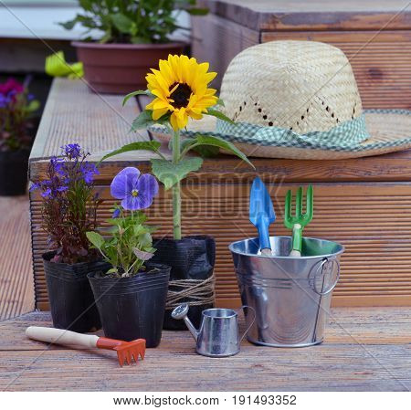 Still life with flowers in planting pots, straw hat and garden tools in cute bucket. Vintage planting flowers concept. Beautiful summer background