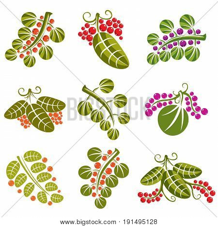 Set of vector green spring leaves with tendrils and different sweet berries and seeds. Ecology theme design elements gardening symbol. Natural icons set.