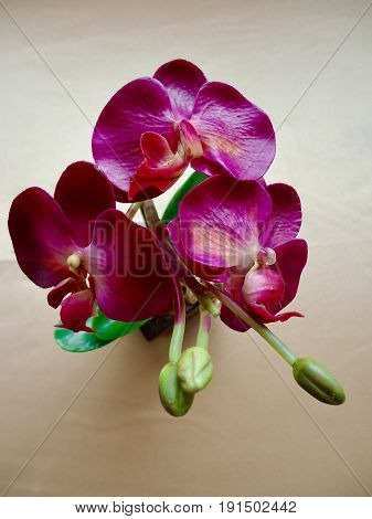 Purple orchid, plastic artificial flower decorated flower