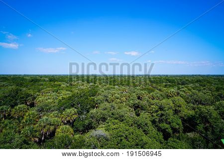Standing on top of a lookout tower above the treeline of the Myakka River state park forest lets you see for miles in all directions.