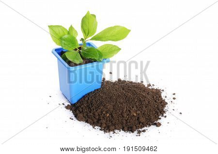 Green Plant In A Flower Pot