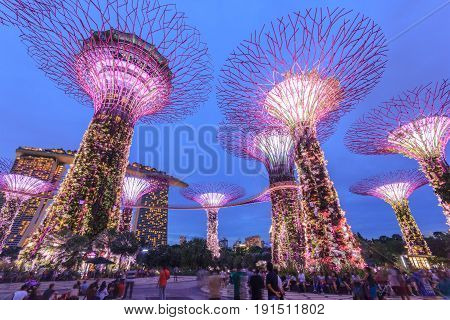 SINGAPORE - MAY 14: Night view of Supertree Grove at Gardens by the Bay on May 14 2016 in Singapore. Spanning 101 hectares of reclaimed land in central Singapore adjacent to the Marina Reservoir