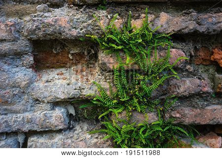 Natural Background With Brick Wall