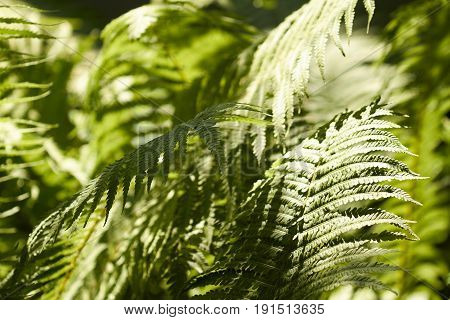 A fern grows in a shady place.