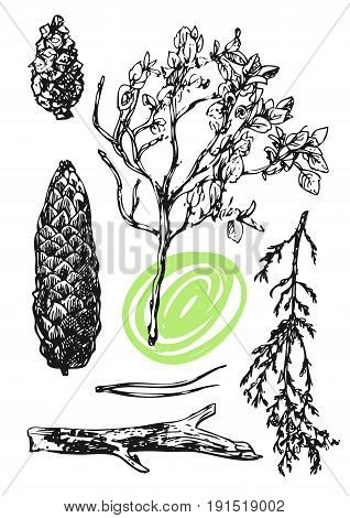 Hand drawn vector illustration with wildflowers and cone. Decorative floral pattern. Sketch style. Us for skrapbuking, tissue, cloth, fabric, web material