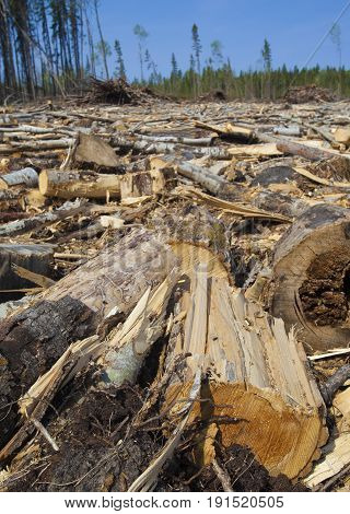 Lots of logs and wood on the ground in a forest in Saskatchewan