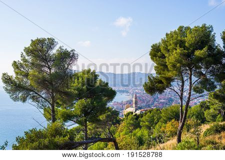 Olives Tree And Maritime Pine Grove High Up On The Hilly Coastline Of Liguria, Italy. The Bay Of Cer