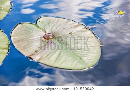 Close up photo of a floating leaf on water
